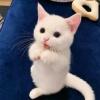 📸 ー (2/3) ➥ 120720 ; WEIBO Renjun a posté de nouvelles photos sur sa page Weibo « Renjun, ciel, chat! 👍 »_2